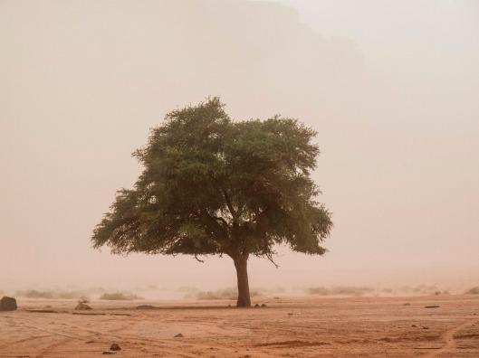 Sand Storm&Lawrence Tree_Still אייל סגל