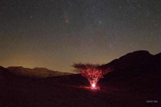 ליל מטאורים פארק תמנע צילום חגית גל
